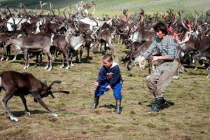 учим правильно ловить оленя